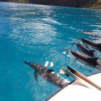Dolphin, Na Pali Coast